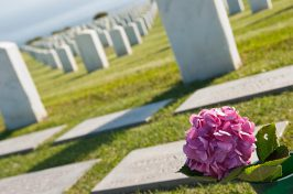 Cemetery with pink flower