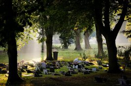Sunlight shining in cemetery